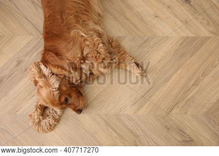 Cute Cocker Spaniel Dog Lying On Warm Floor, Top View. Heating System