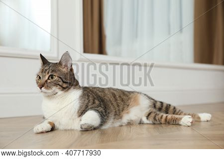 Cute Cat Resting On Warm Floor At Home, Space For Text. Heating System