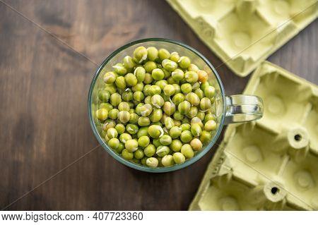 Micro Green Planting Process. Planting Micro Green Peas.