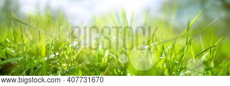 Dewy Fresh Grass In Spring Sun. Seasonal Meadow Background With Light Bokeh And Short Depth Of Field