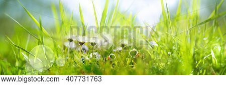 Daisies In A Fresh Green Spring Meadow. Seasonal Sunny Background With Light Bokeh And Short Depth O