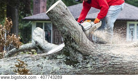 A Landscaper Is Removing A Tree That Fell During A Storm Using A Chainsaw To Slice It Into Pieces.