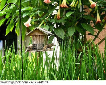 Flowers Hang Over A Wooden Bird Feeder.  Doves And Sparrow Enjoy The Free Meal Of Bird Seeds.  Tall