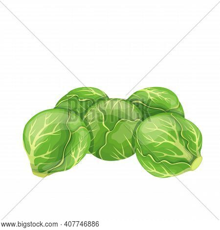 Brussels Sprouts Vector. Green Vegetables In Cartoon Style. Illustration Of A Pile Of Brussels Sprou