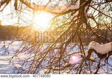The Bright Sun At Sunset On A Winter Day Shines Through The Branches Of The Trees. Beautiful Winter