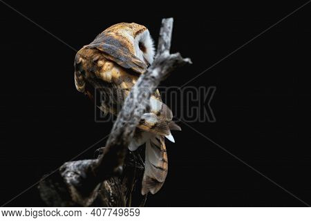 Artistic Rendition Of A Barn Own Perched On A Tree Branch. Black Background