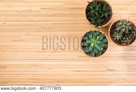 Background with potted succulent and cactus plants on hardwood floor with copy space