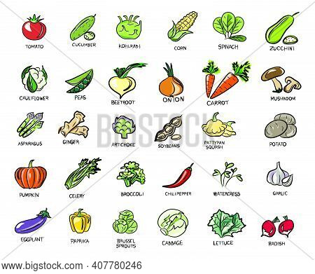 Natural Colors. Vegetables, Mushrooms, Grass And Roots. Proper Nutrition. Vegan, Vegetarian Set Of I