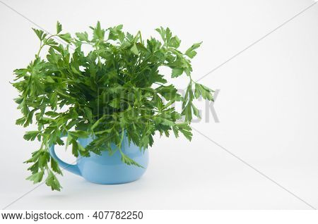 Fresh bunch green parsley bunch in blue bowl on white background. Floral design element. Healthy eating and dieting concept