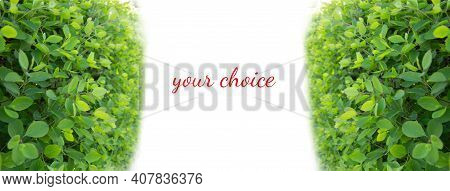 Your Choice. White Road Ahead And Green Bushes On The Sides. Choice Concept
