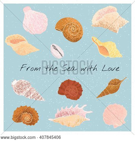 Colorful Set With Hand Drawn Illustrations Of Seashells
