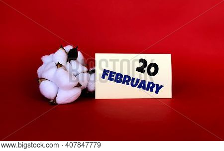 February 20 On A Yellow Sticker.next To It Is Cotton On A Red Background .last Month Of Winter.calen
