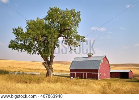 Red Barn Tree and Sunshine. A bright red barn on a hill in the sunshine. Washington State, USA.