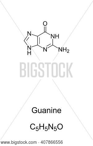 Guanine, G, Gua, Chemical Formula And Skeletal Structure. Nucleobase And A Purine Derivative, One Of
