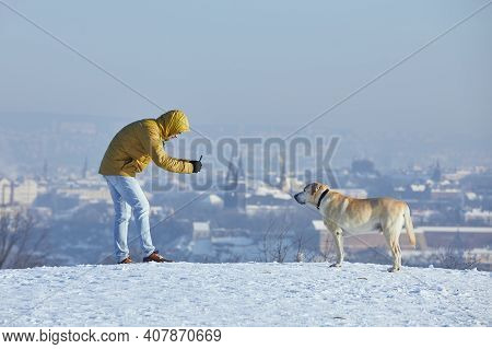 Pet Owner Taking Photo Of His Labrador Retriever Via Smart Phone During Frosty Day. Young Man With D