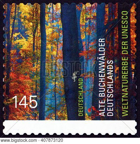 Germany - Circa 1960: A Stamp Printed In Germany Shows Old Beech Forest Of Germany, World Natural He