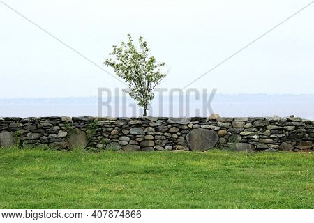 One Small Flowering Pear Tree Behind A Stonewall Border Along The Ocean.