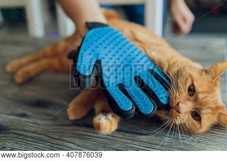 Man Grooming Cat With Special Gloves. Pet Care.