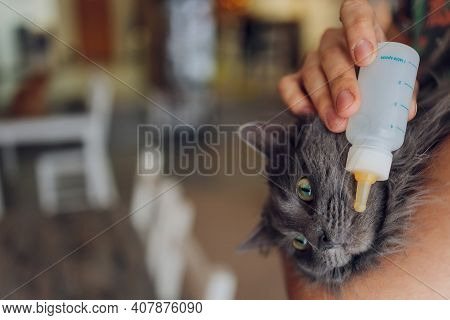 Cute Newborn Kitten With Dropper Milk On Woman Hands. Feeding Kitty Without Mother. Domestic Pet Bab