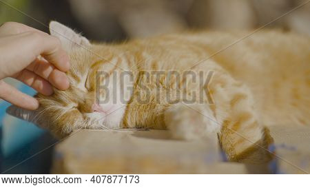 Man Strokes Red Cat On Street. Action. Cute Street Cat Enjoys Being Stroked By Human And Enjoying Su