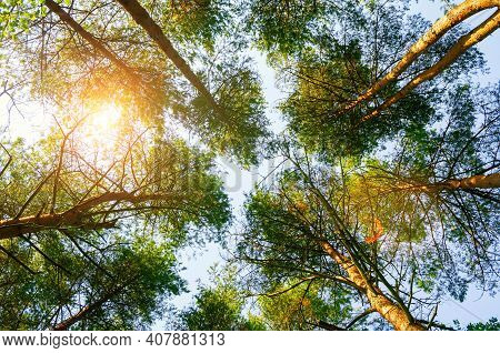 Spring landscape, spring tree tops against blue sky, spring forest background. Spring trees in sunny spring day, spring forest landscape, spring forest trees, spring nature, colorful spring landscape. Spring forest in spring day