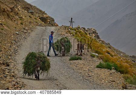 Yamchun. Tajikistan. August 10, 2019. A Peasant With Donkeys Loaded With Hay Slowly Walk Along The P
