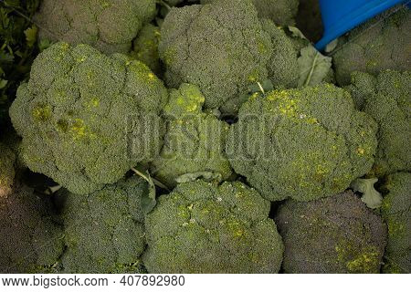 Fresh Broccoli In A Pile At Supermarket. Fresh And Ripe Broccoli Background.