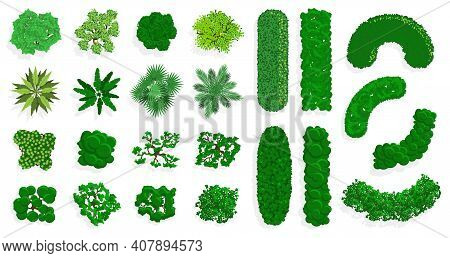 Top View Bushes And Trees. Green Forest Or Park Planting, Green Fences, Bushes And Trees View Above.