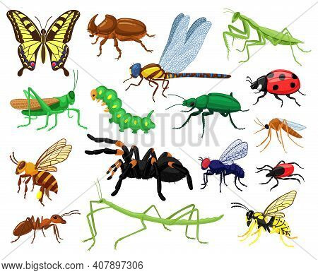 Cartoon Insects. Butterfly, Beetle, Spider, Ladybug And Caterpillar, Wild Forest Entomology Insects.