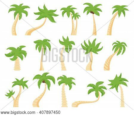 Tropical Palms. Green Floral Palm Tree, Exotic Coconut Palm. Exotic Hawaiian Green Palm Tree Isolate