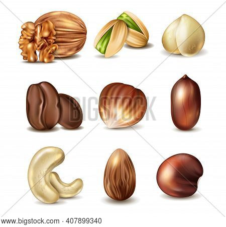 Collection Of Nuts And Beans Isolated On White Background. Walnut, Hazelnut, Coffee, Cashew, Cocoa,