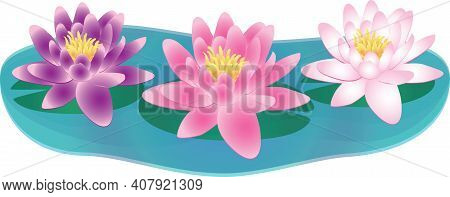 Water Lilies Lily In Water With Lily Pad Graphic