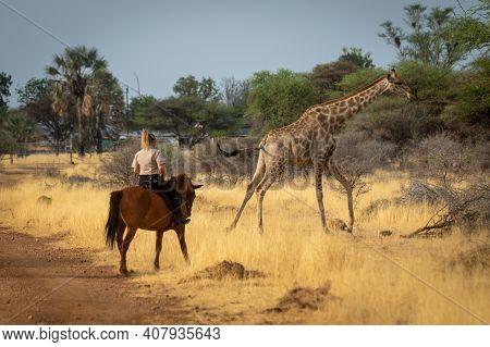 Southern Giraffe Gallops Past Blonde On Horseback