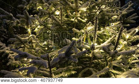 The Photo Shows A Lighted Fir Tree In Winter With Snow With Detail View