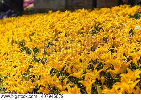 Spring Lily Flower, Spring Background. Spring Composition, Spring Card, Colorful Spring Backgorund,