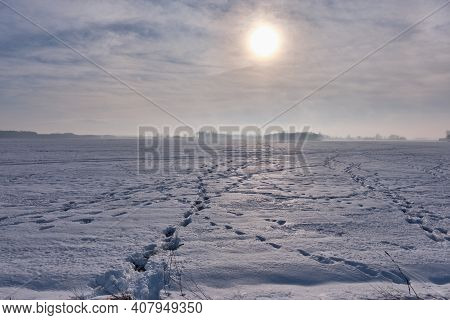 Winter Landscape With Animal Track