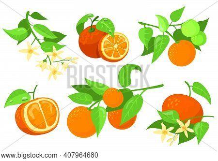 Colorful Orange Branches And Flowers Flat Item Set. Cartoon Drawing Orange, Tangerine And Mandarin I