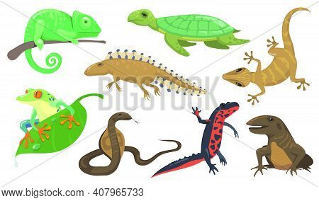 Reptiles And Amphibians Set. Turtle, Lizard, Triton, Gecko Isolated On Shite Background. Vector Illu