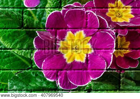 Polyanthus Or Primrose, Imitation Graffiti,mural On A Brick Wall,imitation Painting