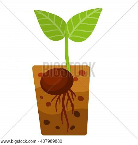 Sprout Of Plant. Small Green Leaves. Sprouted Seed. Farm And Gardening. Planting Of Crop In Ground.