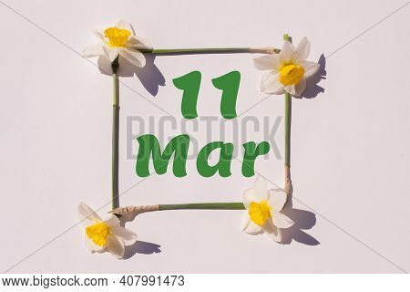 March 11th. Day 11 Of Month , Calendar Date. Frame From Flowers Of A Narcissus On A Light Background
