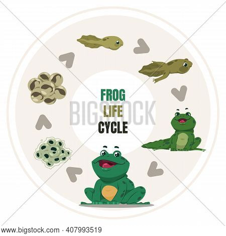 Frog Life Cycle. Cartoon Amphibian Growth Steps. Circular Diagram Of Toad Development, From Frogspaw