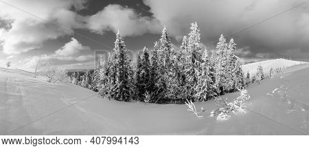 Grayscale. Winter Calm Mountain Landscape With Beautiful Frosting Trees And Snowdrifts On Slope (car