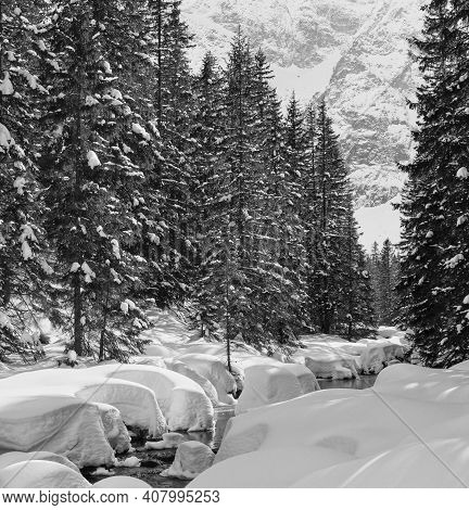 Grayscale. Small Mountain Stream With Snowdrift And Fir Forest.