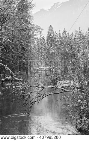 Grayscale. Small Winter Stream With Snowy Trees On Bank.