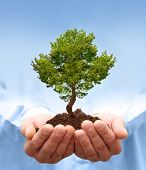 Man hands holding a green tree. Ecology concept poster