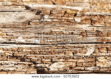 A close up background view of a section of driftwood rotting on a beach in the San Juan Islands. poster