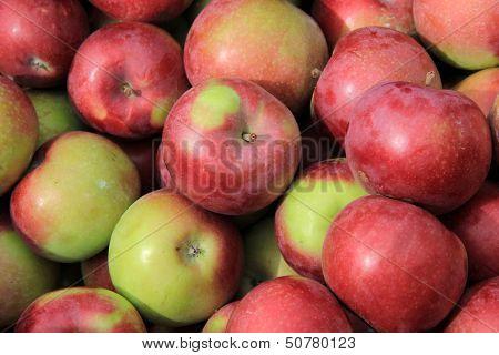 Early Macintosh apples