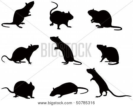 Silhouettes Of Rats