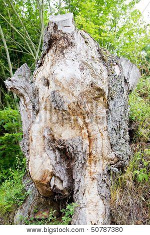 Wooden Female Torso